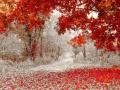 Winter & Fall Meet