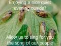 Scumbag Cicadas