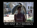 My hat is two sharks