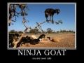 Ninja Goat