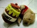 Winnie The Pug