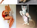 Cats and pin up girls