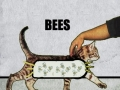 Why do cats purrr