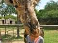 Photobombing lvl: Giraffe