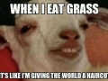 It's grass they said