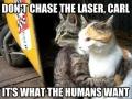 Cats got it