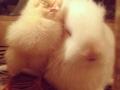 It's so fluffy I'm gonna..