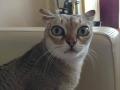 Alarmed Cat