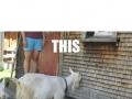 Awkward penguins & goats