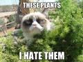 Grumpy cat goes outside