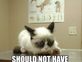 Grumpy cat goes to vets