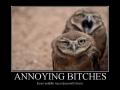 Annoying B*tches