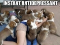 Best anti-depressant ever