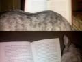 Every time I sit down to read..