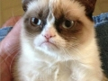 Grumpy cat strikes again