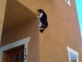 Security cam