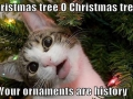 Oh Christmas Tree..
