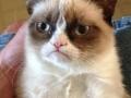 Grumpy Cat on life