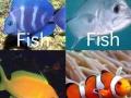 Fish..fish..fish..