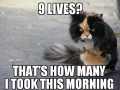 Angry Cat on 9 Lives