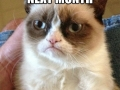 Grumpy cat can't wait