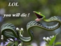 Happy snake is happy