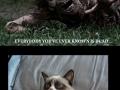 During zombie apocalypse