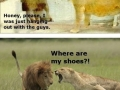 Poor Lion King