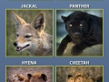 Some of your pet's relatives