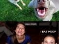 Similarity - I eat poop!