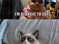 Grumpy Baby & Grumpy Cat