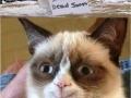 Grumpy cat is very pleased