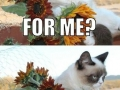 Grumpy cat gets flowers