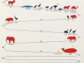 How long do animals live
