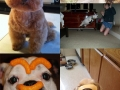 WTF animal pics of 2012