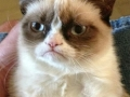 Grumpy cat's message
