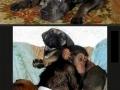 Parenting lvl: Dog