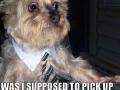 Irresponsible Father Dog