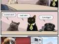 Cats Meeting