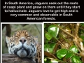 Coolest animal ever