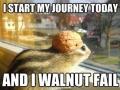 Optimistic Chipmunk