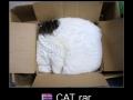Cat archive