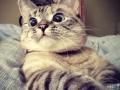 Freaking Cat