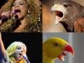 If popstars were birds