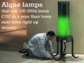 Algae lamps
