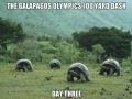 Galapolympics