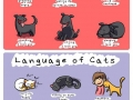 Language of cats & dogs