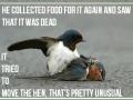 Even birds have feelings!