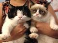 Grumpy cat & her brother