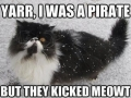 I'm like captain cat Sparrow